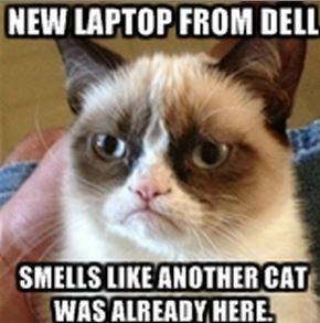 dell-laptop-cat-smell